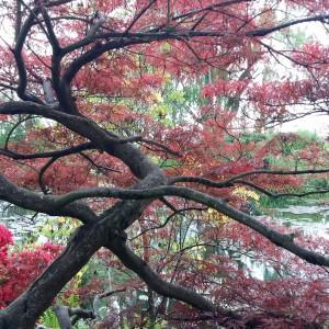 Giverny. Jardins de la Maison de Monet.